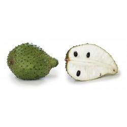 Semi di Guanàbana, Graviola, Corossole (Annona muricata) 2.049999 - 4