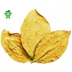 Graines de tabac Virginia Gold 1.75 - 2