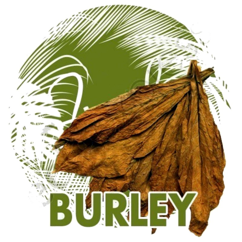 Burley Tabak Samen (Nicotiana tabacum) 1.95 - 1