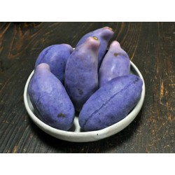 Threeleaf Akebia frön