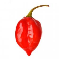 Sementes Da Pimenta Nuclear Red Savina 2.45 - 5
