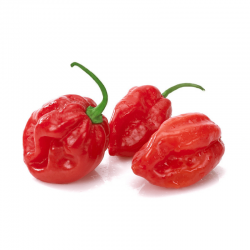 Graines de Piments Habanero Red Savina 2.45 - 3