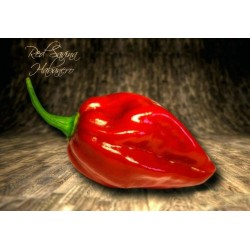 Habanero Savina Red Seeds 2.45 - 4