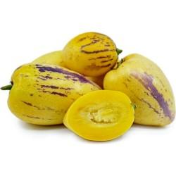 Birnenmelone Pepino Samen (Solanum muricatum) 2.55 - 6