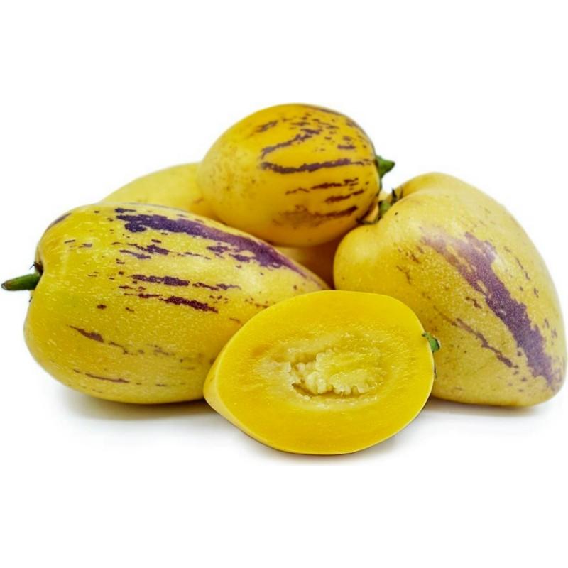 8c5dd2545f11b Graines Poire-melon / Pepino (Solanum muricatum)