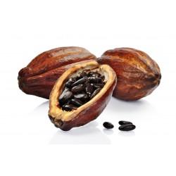 Graines de Cacaoyer - Cacao (Theobroma cacao) 4 - 8