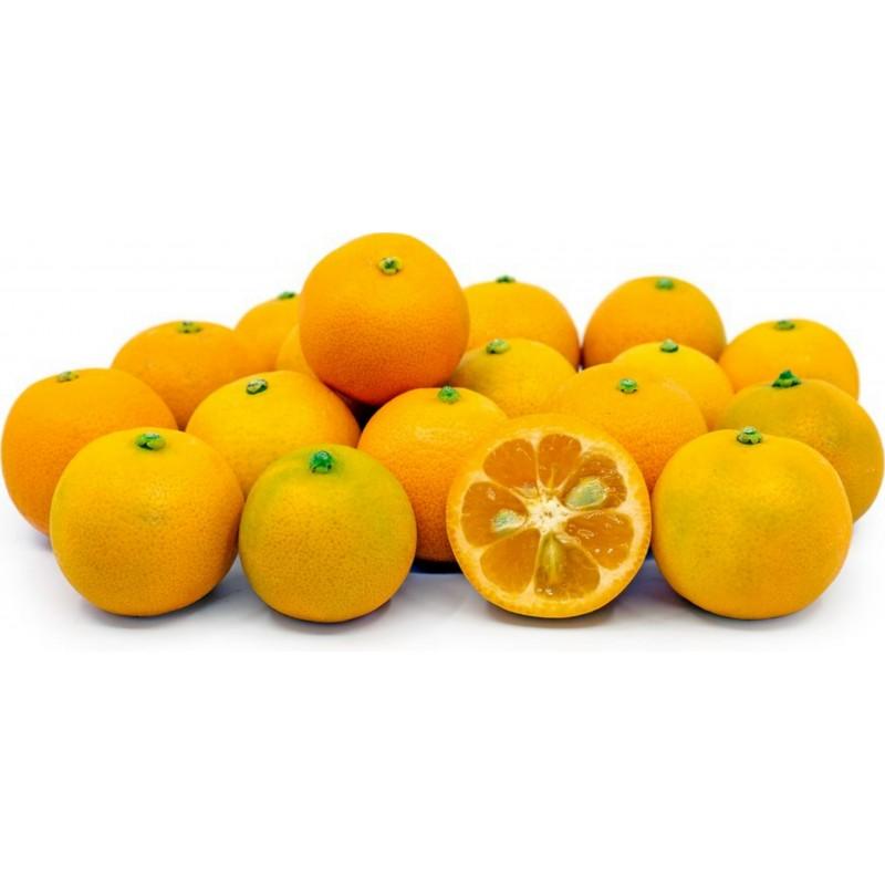 Σπόροι Calamansi - Καλαμοντίν (Citrofortunella μικροκαρπα) 2.65 - 7