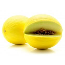 Kanarische Gelbe Honigmelone Samen 1.95 - 3