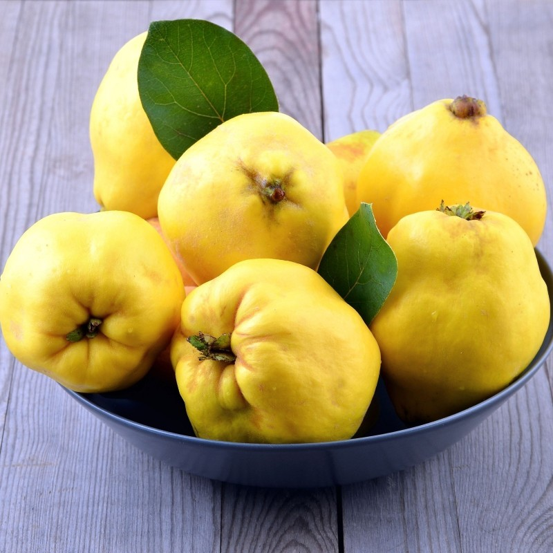Flowering Quince Seeds 2.35 - 6