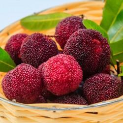 Graines de fraise chinoise (Myrica Rubra) 3.5 - 4