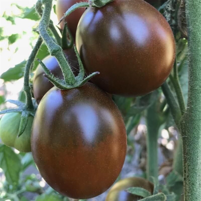 Tomaten Samen BLACK PLUM 2.85 - 4