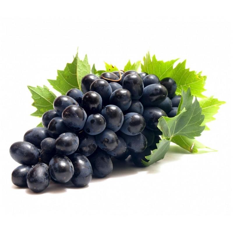 Svart Druva Frön (vitis vinifera) 1.55 - 1