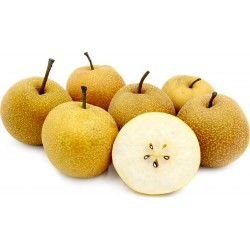Asian Pear Seeds - Chinese Sand Pear (Pyrus pyrifolia) 3 - 1