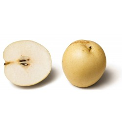 Graines Le Nashi (Pyrus pyrifolia) 3 - 3