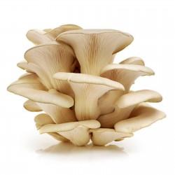 White Oyster Mushroom...