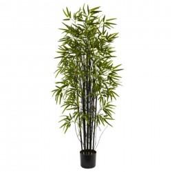 Semillas Bambú Negro (Phyllostachys nigra)