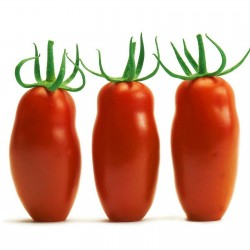 Sementes de Tomate Mini San Marzano Amarelo e vermelho 1.95 - 6