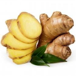 Ginger Tubers - Rhizomes (Zingiber officinale) 8.55 - 1