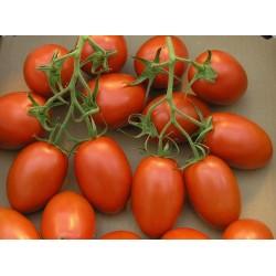 "Graines de Tomate Cherry Plum ""UNO"" 1.95 - 2"