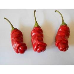 Sementes Pimenta Penis Pepper Peter Diferente E Exótica 3 - 4