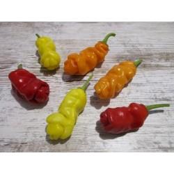 Penis Chili Seme Crveni ili Zuti (Peter Pepper) 3 - 5