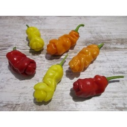Sementes Pimenta Penis Pepper Peter Diferente E Exótica 3 - 5