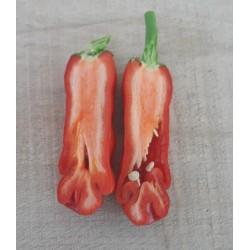 Sementes Pimenta Penis Pepper Peter Diferente E Exótica 3 - 10