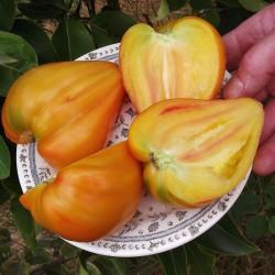 Tomaten Samen Orange Russian 1.8 - 3