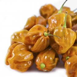 Habanero Mustard Dark Orange Chili Samens 1.85 - 2