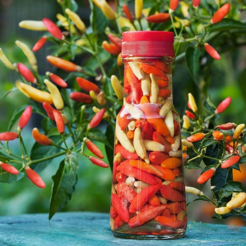 Chili Tabasco Samen 2.15 - 1