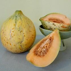 Semillas de melón Eel River 2.049999 - 5