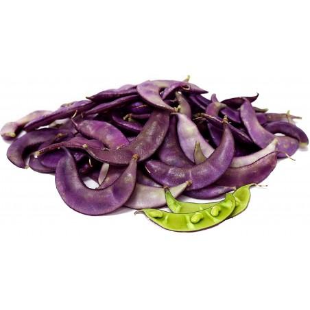 Hyacinth Bean, Lablab-Bean Seeds (Lablab purpureus)