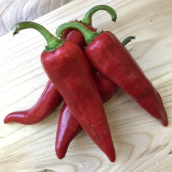 Hot Chili Pepper ANAHEIM seeds (Capsicum Annuum) 1.75 - 2