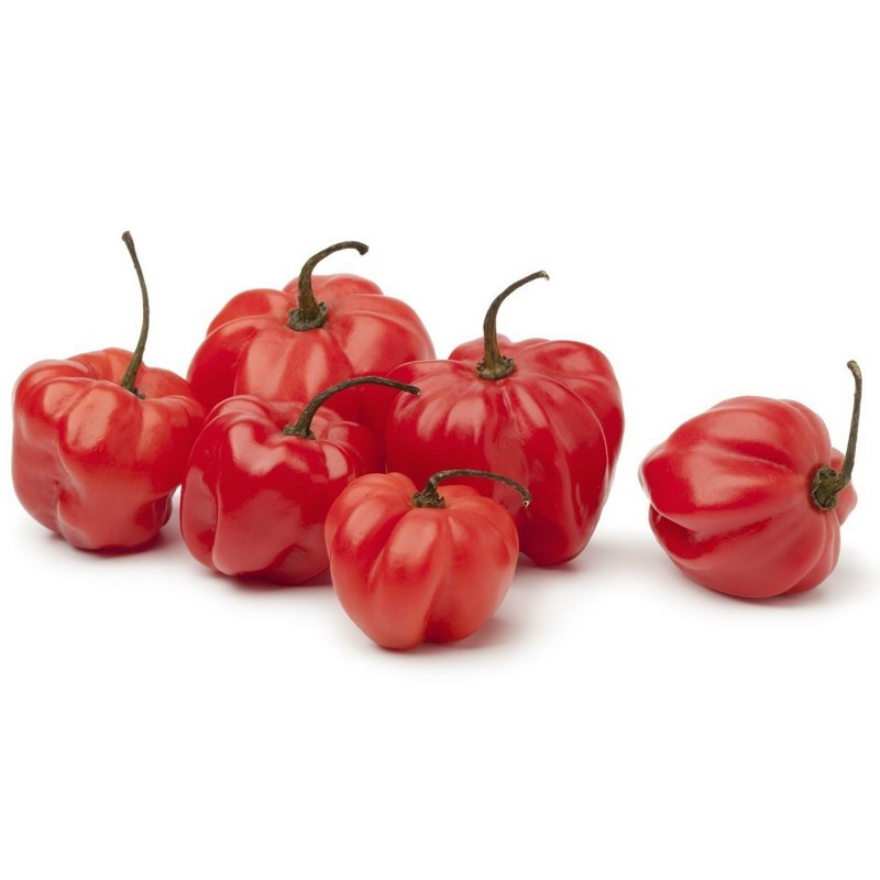 Scotch Bonnet Trinidad Seeds 1.5 - 1