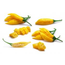 Lemon Drop Chili Seme (Capsicum baccatum) 1.5 - 1