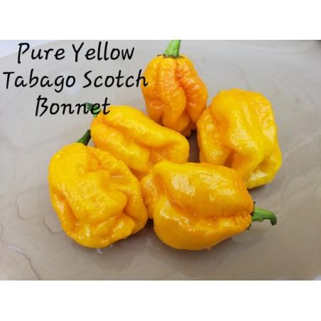 Scotch Bonnet Yellow Chili Seeds 2 - 1