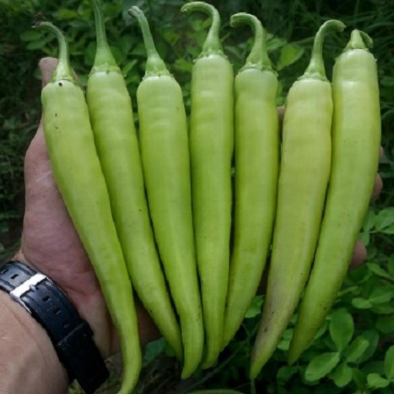 Chili Paprika Samen NISKA SIPKA Serbische Sorte 2.25 - 3
