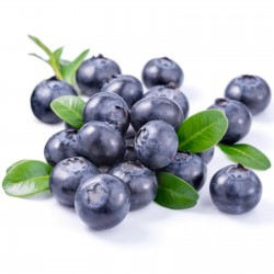 Lowbush Blueberry Seeds...