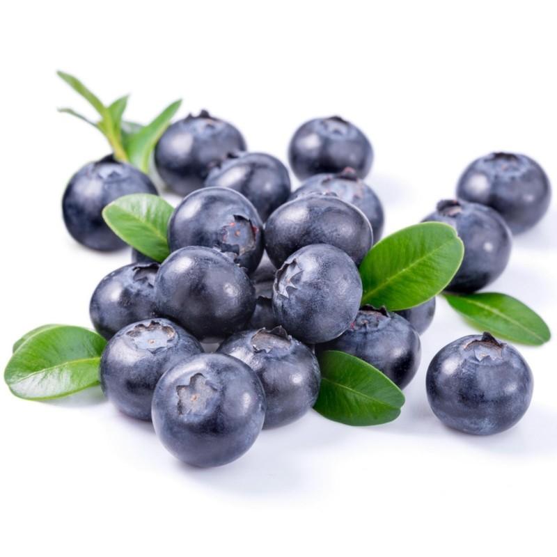 Σπόροι Μυρτιλο Blueberries (Vaccinium angustifolium) 2.5 - 4