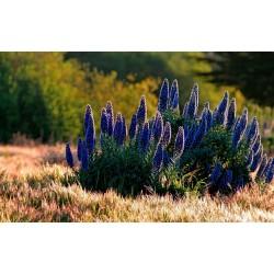 """""""Ponos Madeire"""" Seme 1.5 - 5"""