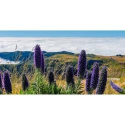 """""""Ponos Madeire"""" Seme 1.5 - 7"""