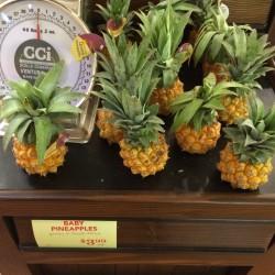 Ananas nanus 'Miniature Pineapple' Seeds 3 - 3