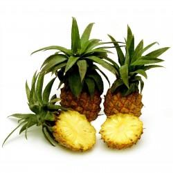"Semi di Ananas nanus ""ananas miniatura"" 3 - 4"