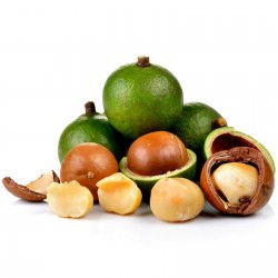 Macadamia Nut Seeds (Macadamia integrifolia) 2.05 - 1