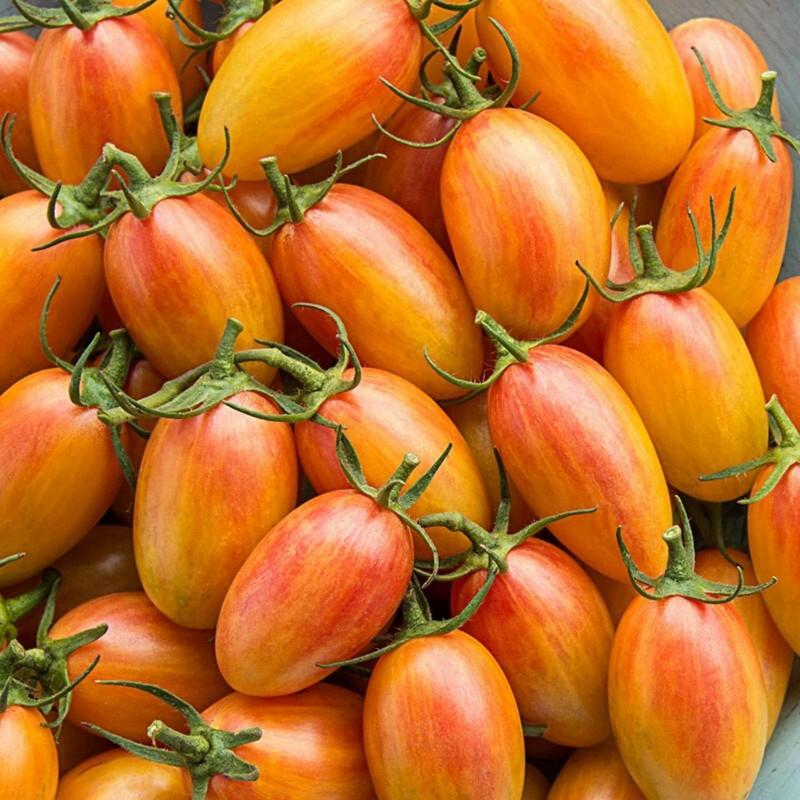 ARTISAN BLUSH TIGER Cherry Tomato Seeds 2.5 - 5