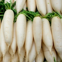 Ice Candle Radish Seeds 1.55 - 2