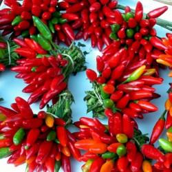 Italienische PEPERONCINI Chili Samen 1.55 - 2