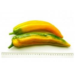Semillas Pimienta dulce MARCONI GOLDEN 1.65 - 1