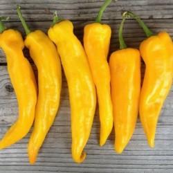 rosso 60 semi per tipo 120 semi peperone giallo peperoni semi italiani