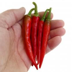 Ring of Fire Chilisaatgut Samen 1.7 - 3